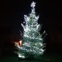 Naturally, a Christmas Tree…