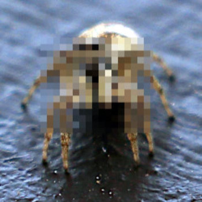 Not for arachnophobes…