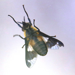 What a deer fly…