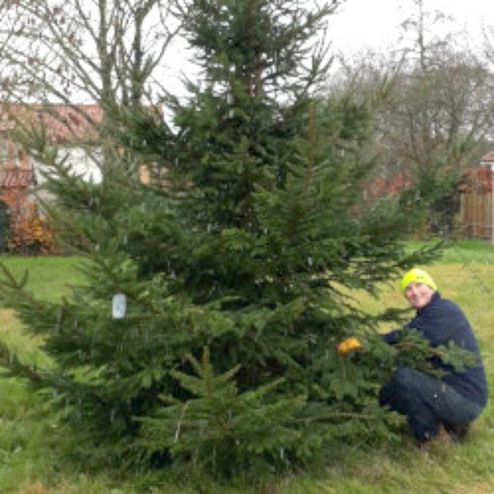 Village Green Christmas Tree brings cheer to Tuttington