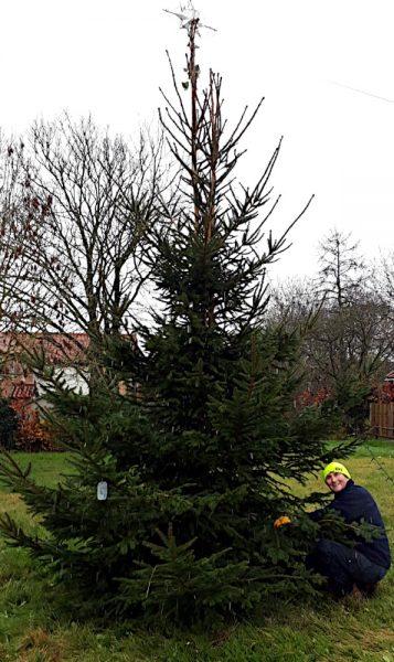 Tree_2020_1